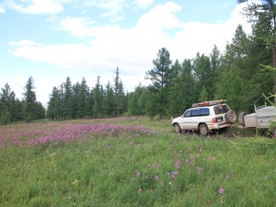 Drive through wildflowers